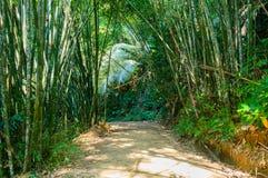 Paisaje en Khao Sok National Park en Tailandia Khao Sok National Park el bosque de la selva de la lluvia en la provincia de Surat Imágenes de archivo libres de regalías