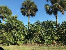 Paisaje en la Florida fotos de archivo