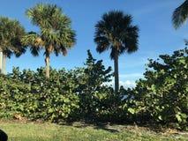 Paisaje en la Florida fotografía de archivo libre de regalías