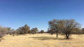 Paisaje en la parte central de Botswana Fotografía de archivo