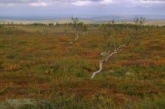 Paisaje en Laponia fotos de archivo