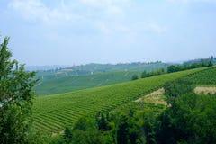 Paisaje en las colinas de Langhe, Piamonte del verano Imagenes de archivo