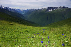 Paisaje en las montañas de Altai, julio de 2016 Imágenes de archivo libres de regalías