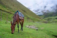 Paisaje en los Andes perú Imagenes de archivo