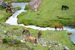Paisaje en los Andes perú Fotos de archivo libres de regalías