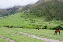 Paisaje en los Andes Senderismo de Salkantay, Perú Fotografía de archivo libre de regalías