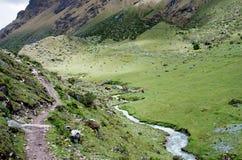 Paisaje en los Andes Senderismo de Salkantay, Perú Imágenes de archivo libres de regalías