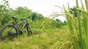 Paisaje en los campos del arroz con la bicicleta imagen de archivo