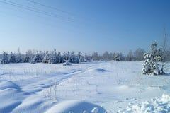 Paisaje en madera del invierno Imagen de archivo