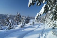 Paisaje en madera del invierno Imágenes de archivo libres de regalías