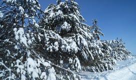 Paisaje en madera del invierno Imagen de archivo libre de regalías