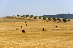 Paisaje en Maremma (Toscana) Foto de archivo libre de regalías