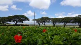 Paisaje en Maui Fotos de archivo