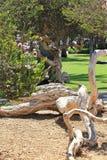 Paisaje en parque Foto de archivo libre de regalías