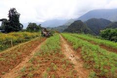 Paisaje en Sapa, Vietnam Foto de archivo