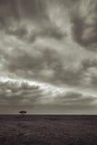 Paisaje en Serengeti Imagen de archivo libre de regalías