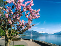 Paisaje en Suiza Imagen de archivo libre de regalías
