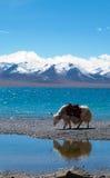 Paisaje en Tíbet Fotos de archivo libres de regalías
