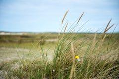 Paisaje en Texel Foto de archivo libre de regalías