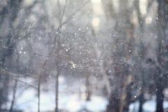 Paisaje en un bosque Imagenes de archivo