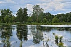 Paisaje en un lago del verano Fotos de archivo