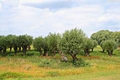 Paisaje en verano cerca del río Elba Foto de archivo libre de regalías