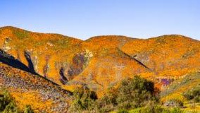 Paisaje en Walker Canyon durante el superbloom, amapolas de California que cubren los valles y los cantos, lago Elsinore de la mo fotografía de archivo libre de regalías