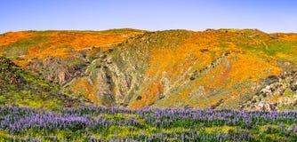 Paisaje en Walker Canyon durante el superbloom, amapolas de California que cubren los valles y los cantos, lago Elsinore de la mo fotos de archivo libres de regalías