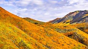 Paisaje en Walker Canyon durante el superbloom, amapolas de California que cubren los valles y los cantos, lago Elsinore de la mo imágenes de archivo libres de regalías