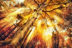 Paisaje encantador del bosque en otoño imagen de archivo libre de regalías