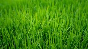 Paisaje enorme del campo de hierba verde foto de archivo