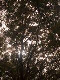 Paisaje enorme hermoso del top del árbol en el ou de la caída de las hojas de los colores del otoño Imagenes de archivo