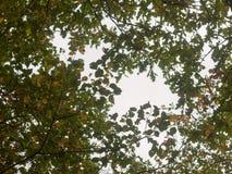 Paisaje enorme hermoso del top del árbol en el ou de la caída de las hojas de los colores del otoño Fotografía de archivo libre de regalías