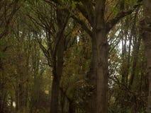 Paisaje enorme hermoso del top del árbol en el ou de la caída de las hojas de los colores del otoño Imagen de archivo