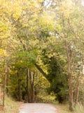 Paisaje enorme hermoso del top del árbol en el ou de la caída de las hojas de los colores del otoño Foto de archivo libre de regalías