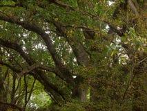 Paisaje enorme hermoso del top del árbol en el ou de la caída de las hojas de los colores del otoño Imagen de archivo libre de regalías