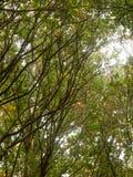 Paisaje enorme hermoso del top del árbol en el ou de la caída de las hojas de los colores del otoño Foto de archivo