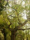 Paisaje enorme hermoso del top del árbol en el ou de la caída de las hojas de los colores del otoño Imágenes de archivo libres de regalías