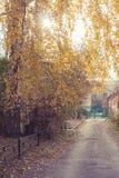 Paisaje entonado del otoño con la acera y el abedul amarillo Fotografía de archivo libre de regalías