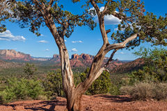 Paisaje escénico de Sedona Arizona Fotos de archivo