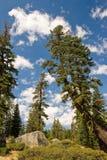 Paisaje escénico del bosque Imagenes de archivo