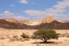 Paisaje escénico del desierto del Néguev Fotos de archivo libres de regalías