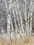 Paisaje escénico del invierno Imagenes de archivo