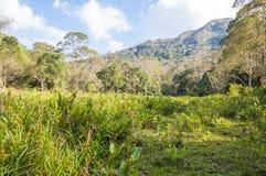 Paisaje escénico del parque nacional de Periyar, Thekkady, Kerala, la India imagen de archivo libre de regalías