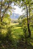 Paisaje escénico del parque nacional de Periyar, Thekkady, Kerala, la India imágenes de archivo libres de regalías