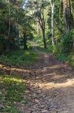 Paisaje escénico del parque nacional de Periyar, Thekkady, Kerala, la India fotos de archivo
