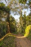 Paisaje escénico del parque nacional de Periyar, Thekkady, Kerala, la India fotografía de archivo