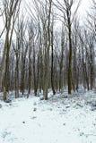 Paisaje escarchado del invierno en bosque nevoso del invierno del bosque Imagen de archivo libre de regalías