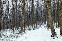 Paisaje escarchado del invierno en bosque nevoso del invierno del bosque Fotos de archivo libres de regalías