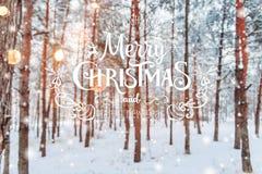 Paisaje escarchado del invierno en fondo nevoso de Navidad del bosque con los abetos y el fondo borroso del invierno con el texto Fotografía de archivo libre de regalías